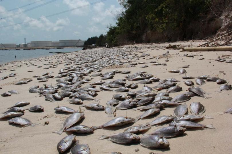 3-17-2016 Dead Fish, Thailand