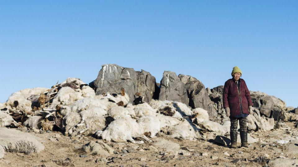 Extreme Cold Kills 350,000 Animals,Mongolia